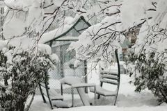 A snowy tree brunch with a blurred bower background. On a winter day Royalty Free Stock Image