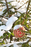 Snowy tree with Christmas decoration Stock Images