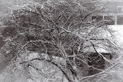 Snowy tree in the city Royalty Free Stock Images