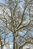 Snowy Tree on a cold winter day Stock Images