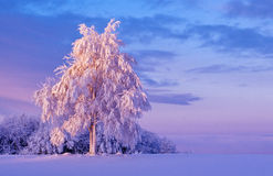 Snowy tree at dawn Stock Photo