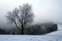 Snowy tree Stock Image
