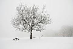 Snowy tree. On a hilltop Stock Photo