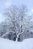Snowy Tree I Stock Photo