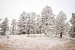 Snowy Tree Landscape. Grey snowy tree landscape in the Colorado winter Stock Images