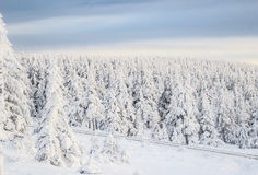 Snowy tree landscape. Snowy trees with sunset german Harz mountains Royalty Free Stock Images