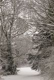 A snowy scene on Southampton Common stock image