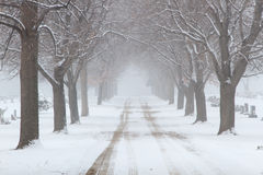Snowy tree lined road through a cemetary. A road runs through a cemetary on a snowy winter day stock photography