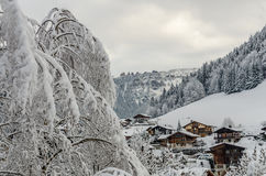 Snowy tree and Morzine vilage chalets. The view panorama of Morzine village chalets with a snowy tree branches under the overcast cloudy sky Royalty Free Stock Image