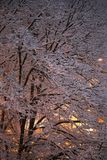 Snowy tree at the night Stock Photo