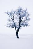 Snowy tree Royalty Free Stock Image
