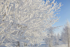 Snowy tree in park. winter nature Royalty Free Stock Images