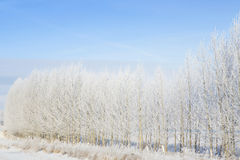 Snowy tree in park. winter nature Royalty Free Stock Photos