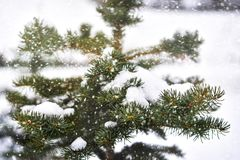 Snowy tree in the park. Winter season, cold , christmas Stock Image