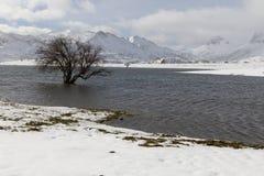 Snowy Tree Reservoir Royalty Free Stock Photo