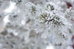 A snowy tree Stock Images