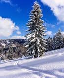Snowy tree on ski resort in Carpathian Mountains Stock Images