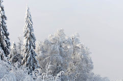 Snowy tree. Snow-covered forest in the Ural Mountains Royalty Free Stock Photos