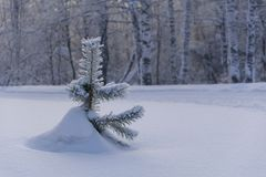 Snowy tree in the snow royalty free stock photos