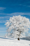 Snowy tree on a sunny day Stock Image