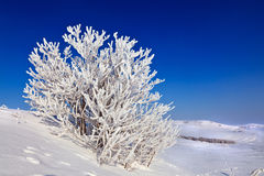 Snowy tree on a sunny day Royalty Free Stock Photography