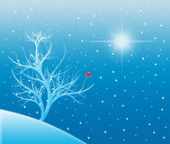 Snowy Tree Under a Bright Star Stock Photography