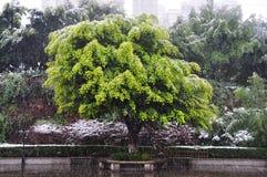 Snowy Tree in Winter Stock Photo