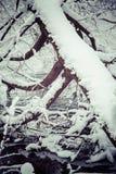 Snowy tree. Winter forest at region Orava, Slovakia royalty free stock photography