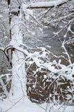 Snowy tree. Winter forest at region Orava, Slovakia royalty free stock photo