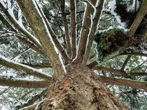 Snowy Tree in Winter. A tree has branches lined with snow after a fresh snowfall Royalty Free Stock Photography
