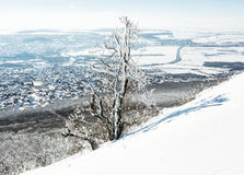 Snowy tree and winter landscape, Nitra city, Slovakia Stock Images