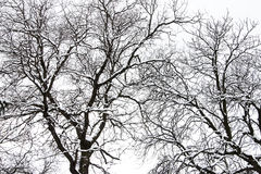 Snowy Tree In The Winter Royalty Free Stock Photo