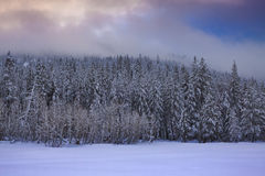 Snowy Treeline Stock Photo