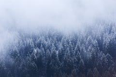 Snowy Treeline fotografie stock
