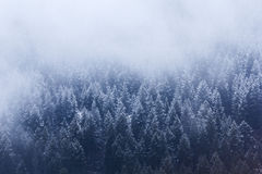 Snowy Treeline Stock Photos