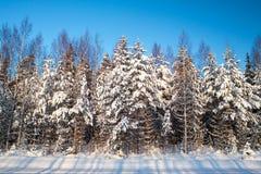 Snowy trees Royalty Free Stock Photo