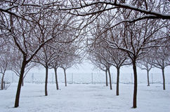 Snowy trees. In the middle f the field stock photography