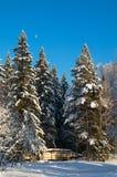 Snowy Trees Stock Photos