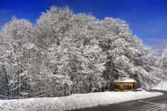 Snowy trees. Snowy kioski under snowy trees Royalty Free Stock Photography