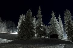 Snowy trees Stock Photography