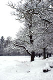 Snowy Trees. Winter snow scene with woodland trees Royalty Free Stock Image