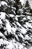 Snowy trees Stock Photo