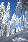 Snowy trees. In winter beskydy mountains Stock Photos
