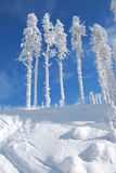 Snowy trees. In winter beskydy mountains Royalty Free Stock Image