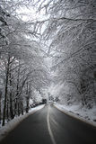 Snowy trees above the road, up to the montains Royalty Free Stock Photo