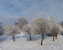 Snowy trees against the blue sky Royalty Free Stock Photography