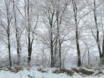 Snowy trees. Along the road Stock Images