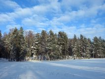 Snowy trees and beautiful cloudy sky, Lithuania Royalty Free Stock Photo