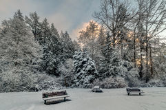 Snowy Trees and Benches. Snow covered benches and picnic table next to snowy trees and blue sunset sky Royalty Free Stock Image