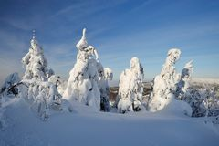 Snowy trees in Beskydy Mountains stock photos